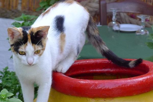 gatto che gioca con un vaso