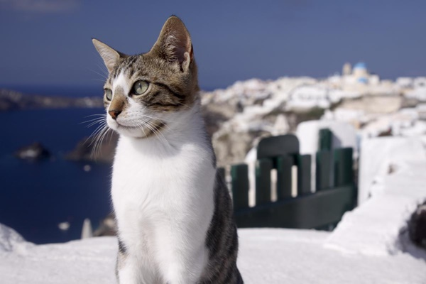 gatto con panorama marino