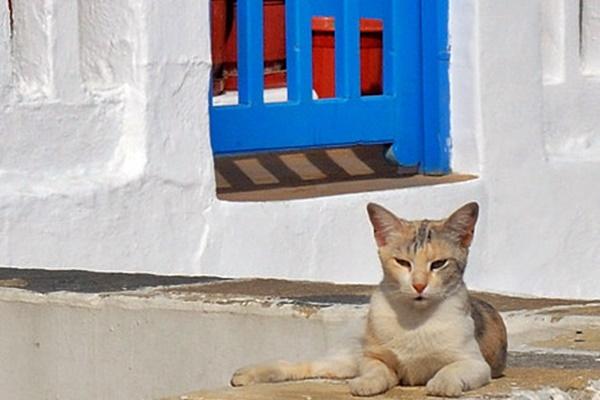 gatto randagio in grecia