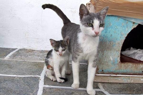 mamma gatta con il suo gattino