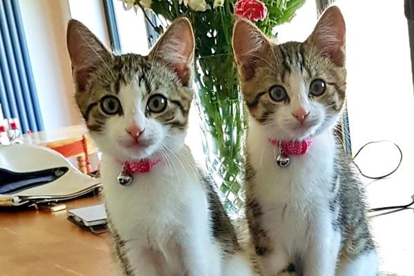 due gattini gemelli