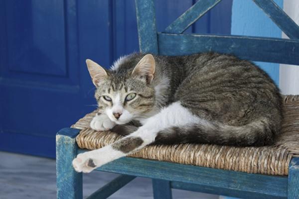 gatto che dorme su una sedia