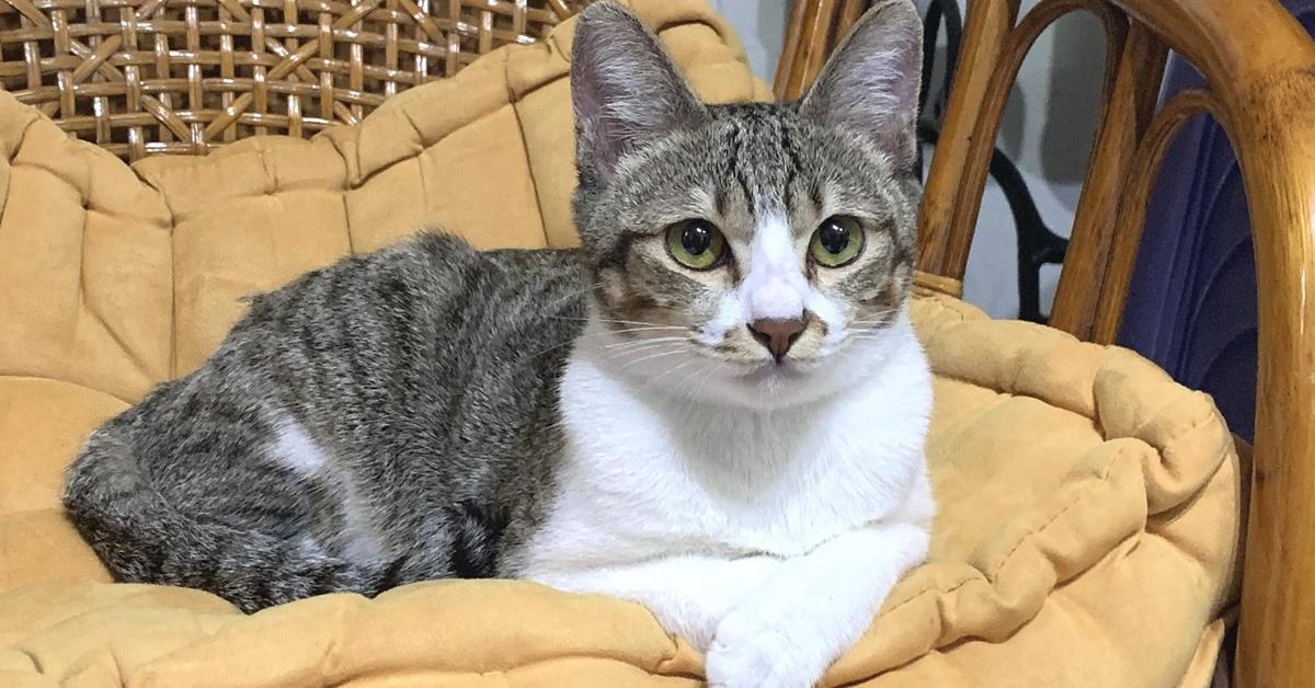 gatto disteso su una poltrona