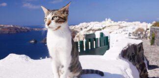 gatto che vive sul mare