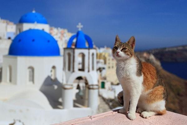 gatto egeo tesoro nazionale della grecia