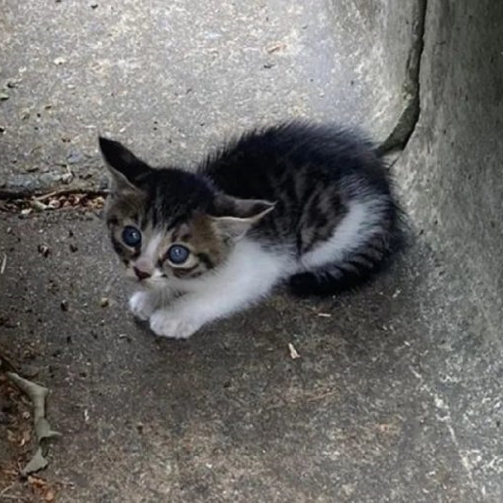 claddagh gatto avvistamento clare