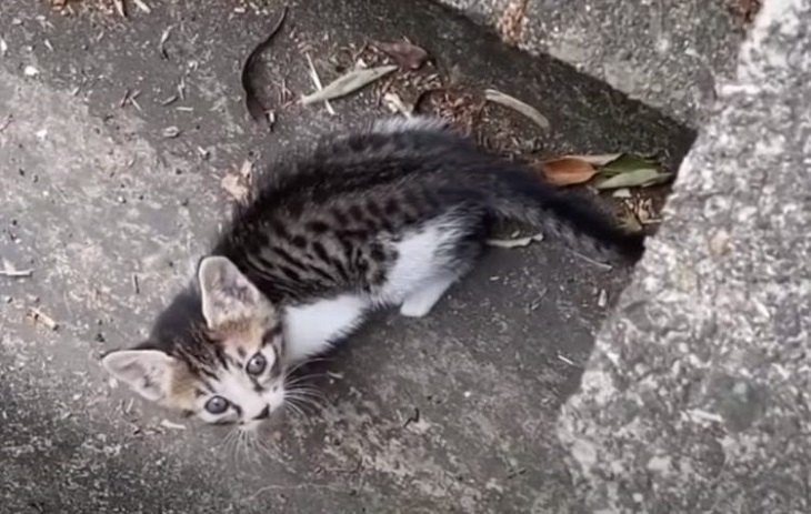claddagh gattino strada randagio