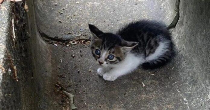 gatto vive la vita dei sogni dopo essere salvato tombino
