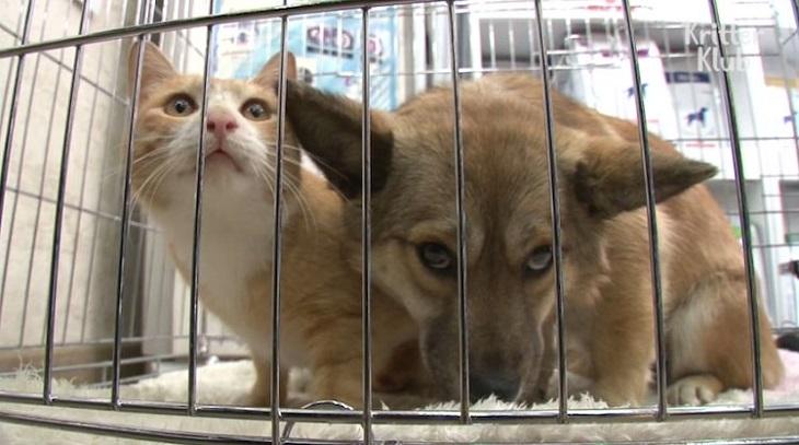 gattino cane team di soccorso aiuto