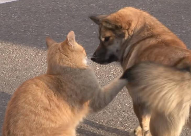 gattino strada incontra amico cane