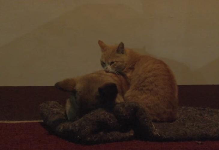 gattino cane amicizia corea del sud