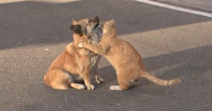 gattino randagio consola cane abbandonato