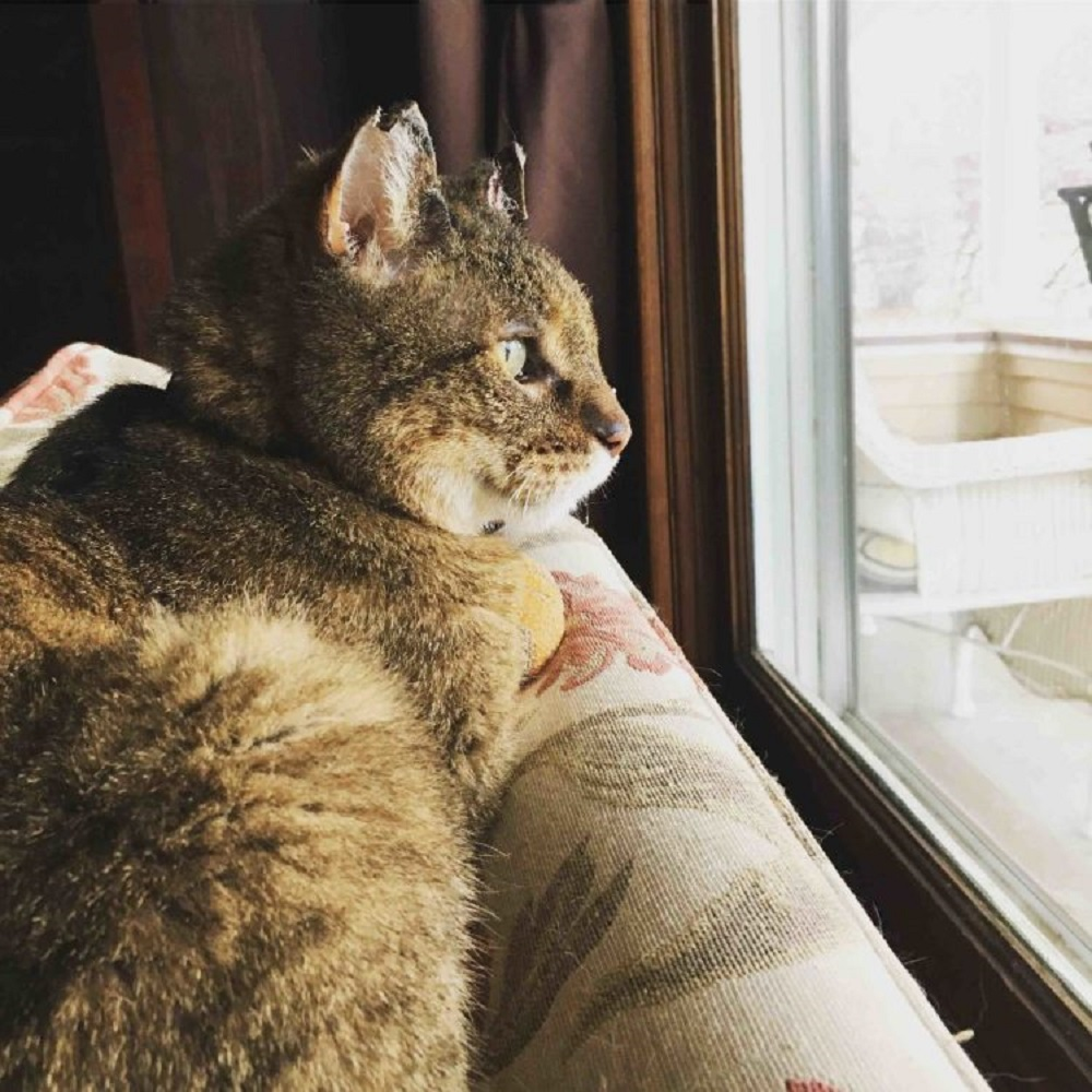 pilot gatto scomparsa ricerche