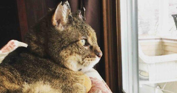 gattino pilot ritrova famiglia dopo 10 anni scomparsa