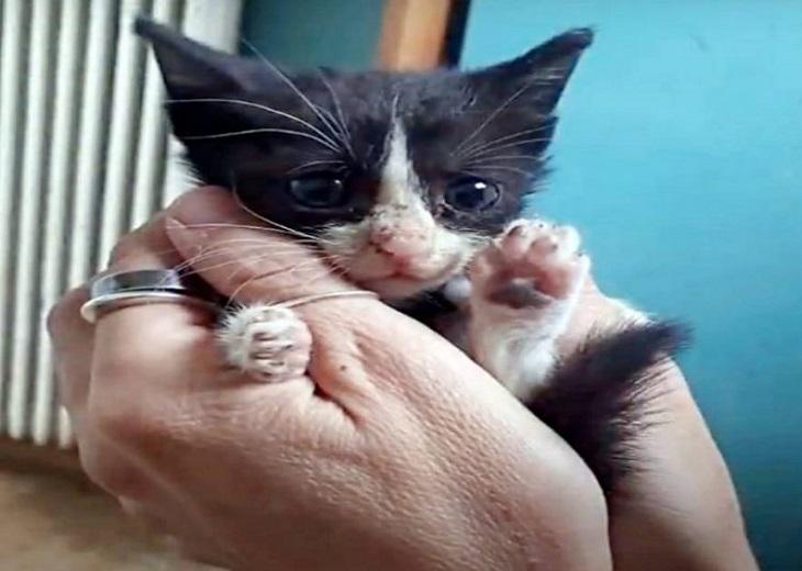frog gattino impegno valia