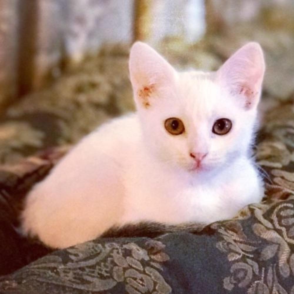 blanca gattina salvataggio alluvione
