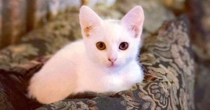 salvataggio gattino intrappolato sotto pavimento casa