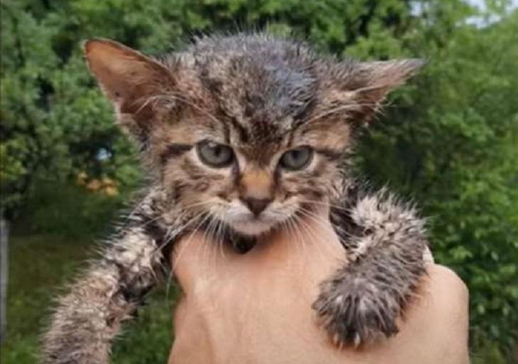 max gatto danni attacchi