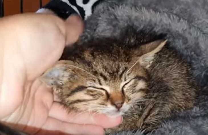 max gattino sconfigge destino crudele
