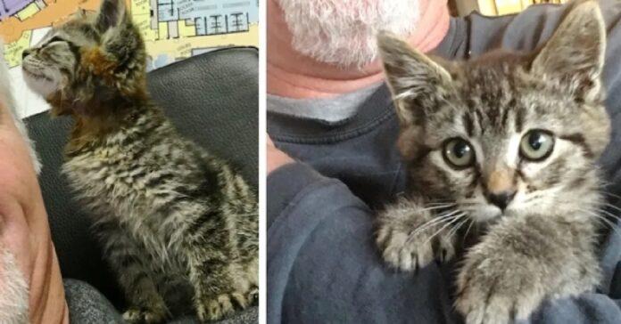 salvataggio gattino rimasto bloccato autostrada