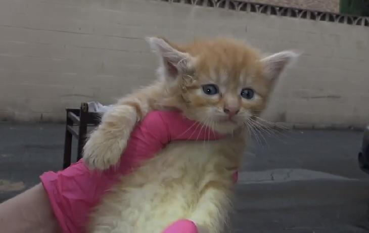 soccorritori attirano mamma gatta con cibo