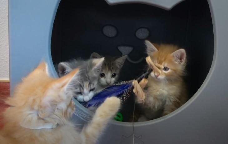 gatti rifugio dopo salvataggio divano