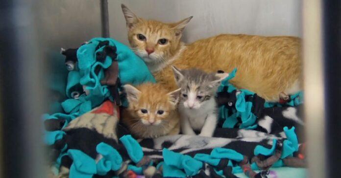 salvataggio 5 gattini bloccati divano rovinato