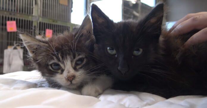 salvataggio due gattini bloccati canale scolo