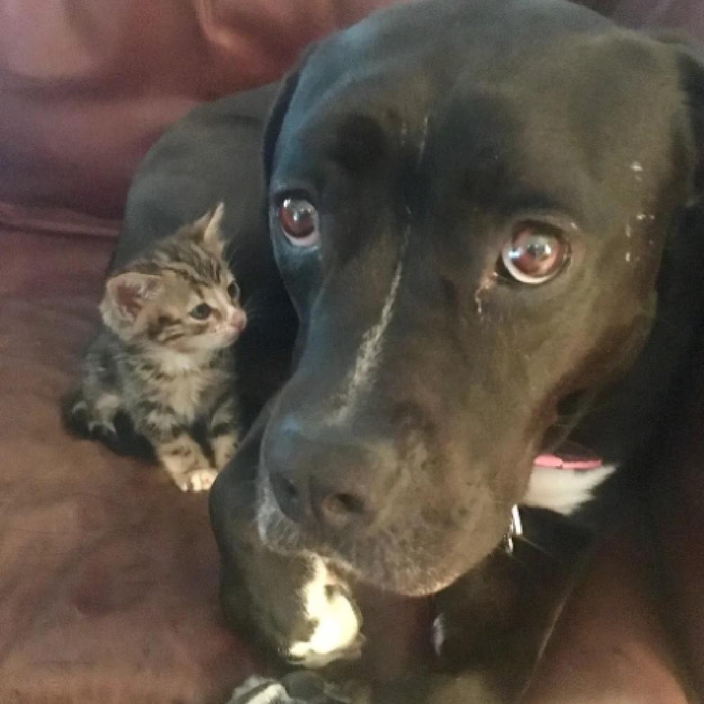 crenshaw gattina insieme roxy