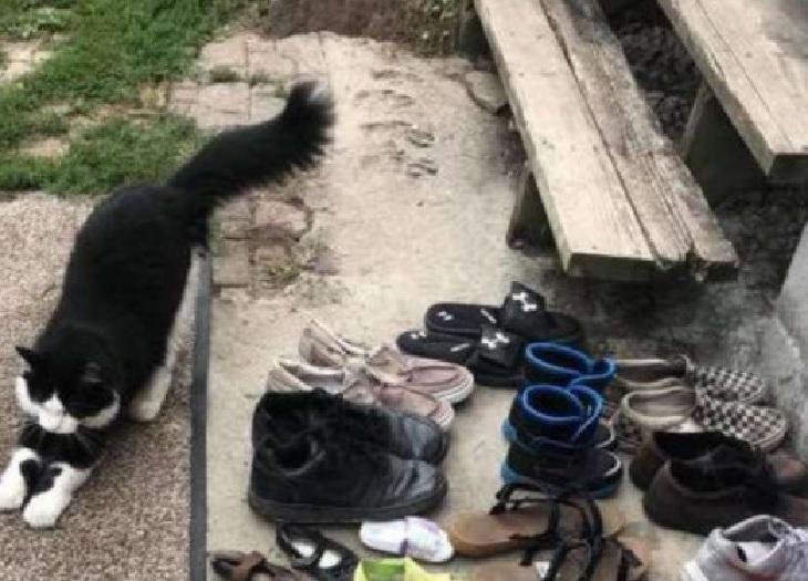 jordan gatto record scarpe rubate