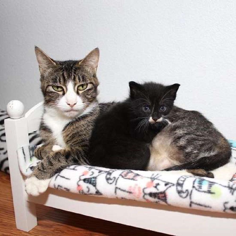 lucy gatta mamma trova casa