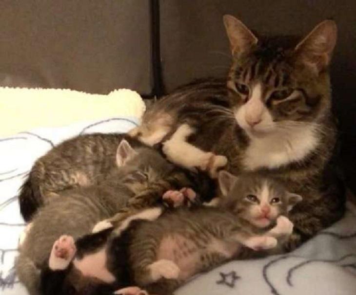 lucy gatta mamma salvataggio