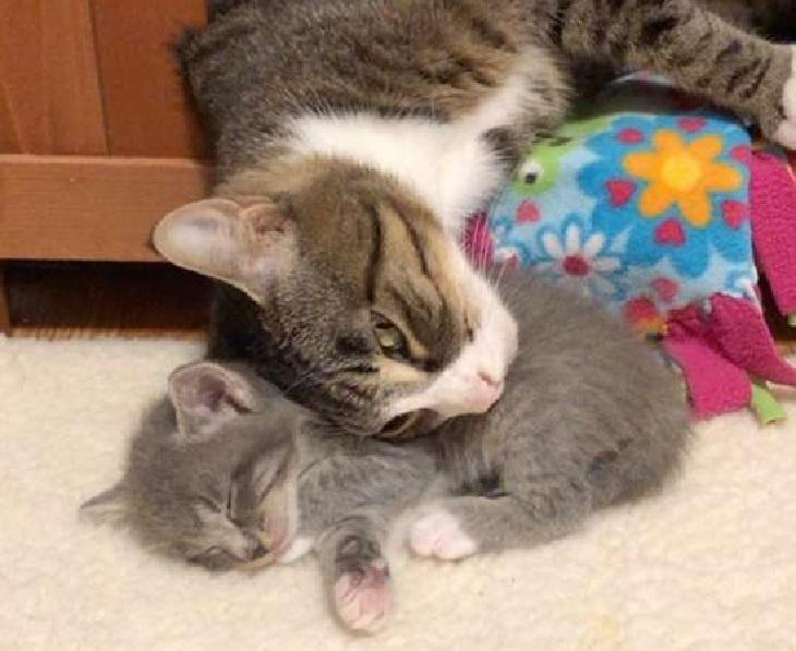 lucy mamma amore gattini