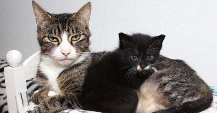 lucy la gatta madre di 6 splendidi gattini