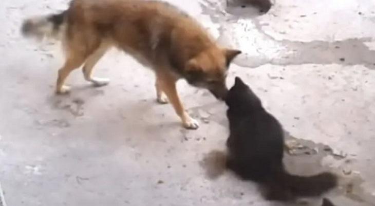 mamma gatta incontra vecchio amico