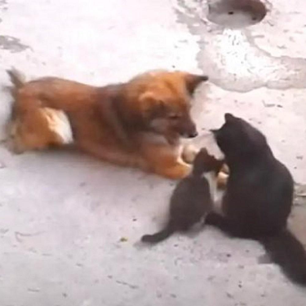 mamma gatta presenta piccolino cane