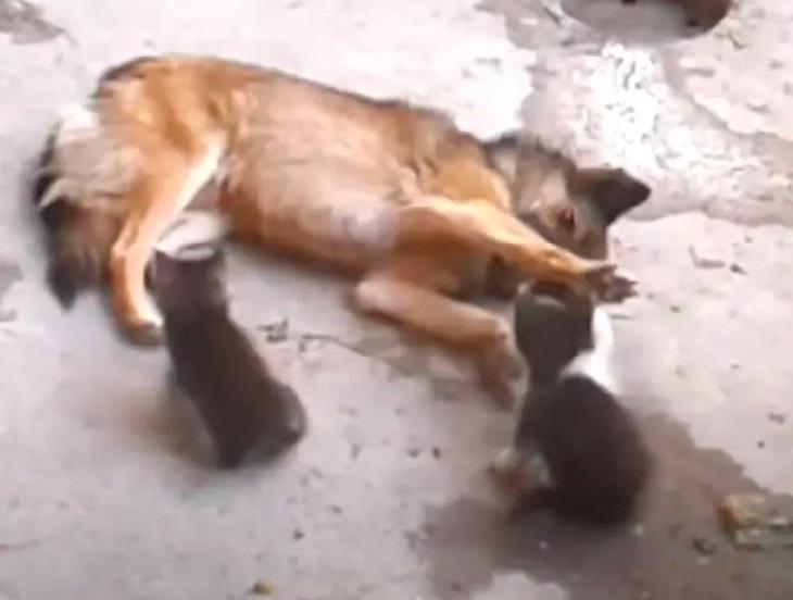 mamma gatta e cane superano ostacoli amicizia