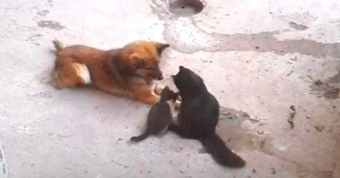 mamma gatta presenta piccoli gattini vecchio amico