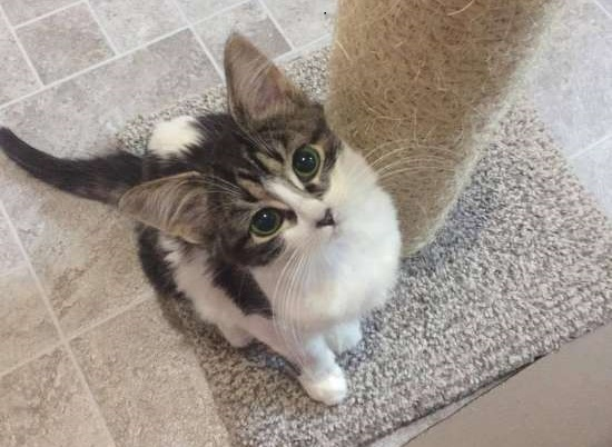 minnie gattina adozione famiglia