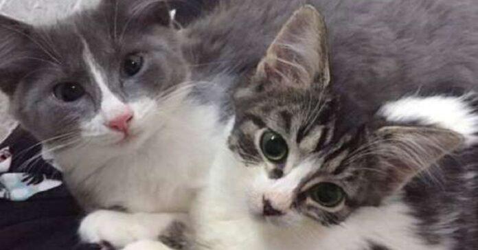 minnie piccola gattina trova finalmente casa