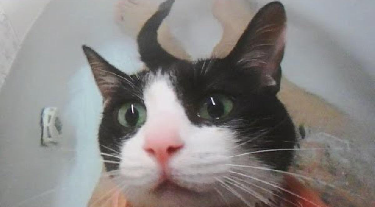 Moo gattino ama fare il bagno