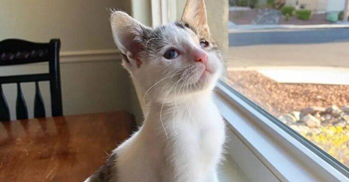 Newt il gattino