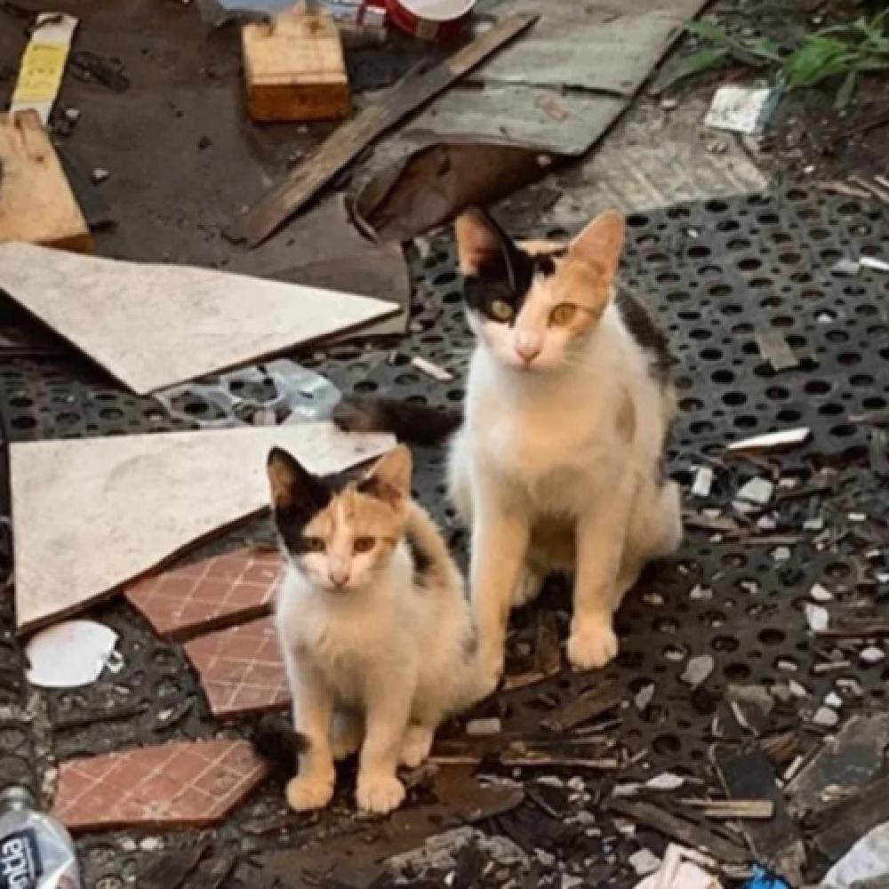 penny mamma gatta lotta sopravvivenza