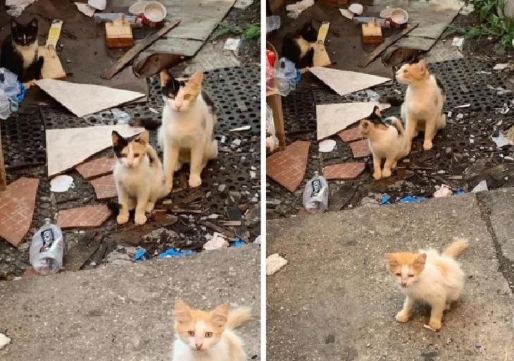 penny mamma gatta vita di strada