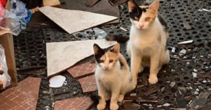 penny gatta madre di 3 piccoli trova loro una casa