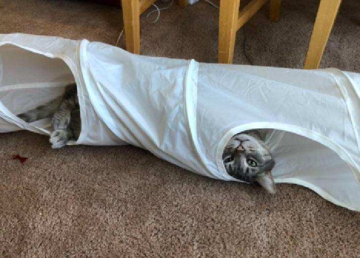 remus gatto 10 anni abbandona passatempo