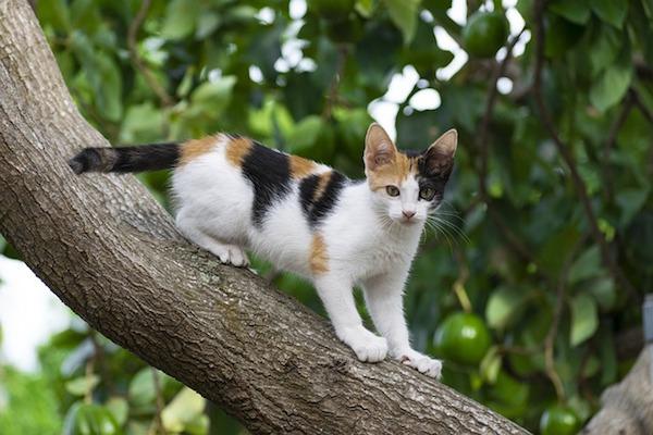 gattino scappa su albero