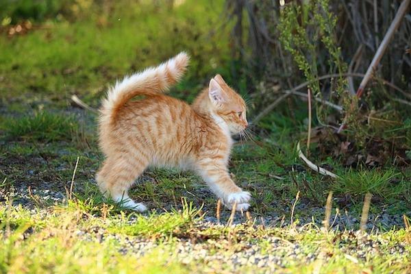 gattino combina guai e scappa