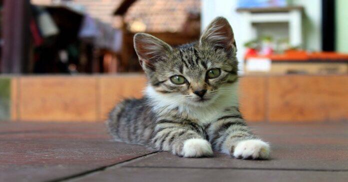 come sgridare il gattino