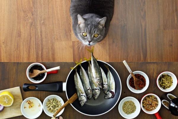 cucinare con il gatto